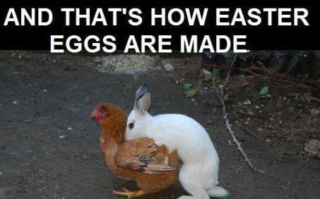 Funny Easter Jokes Memes
