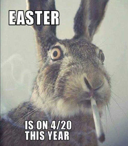 Easter Bunny Memes Images