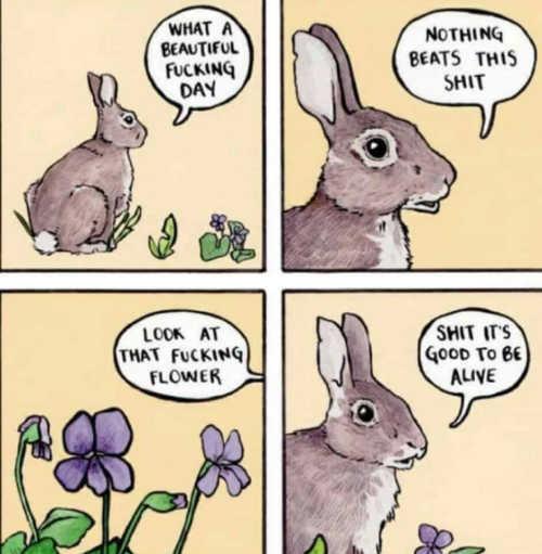 Easter Bunny Memes Jokes