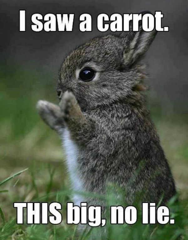Funny Easter Memes 2020