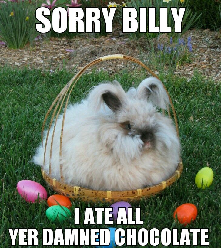 Happy Easter Memes
